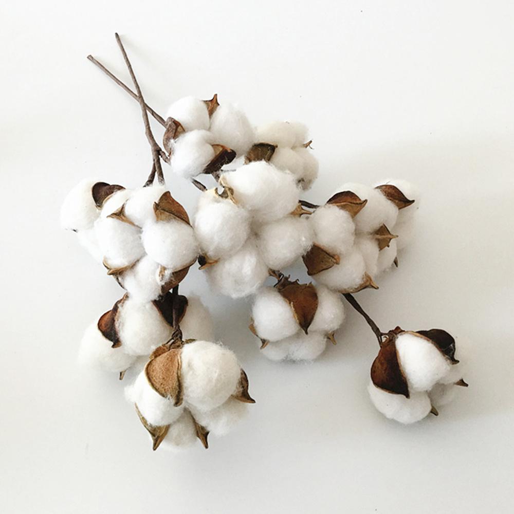 Branche Fleur De Coton 6 têtes de fleurs séchées en coton, branche de fleurs