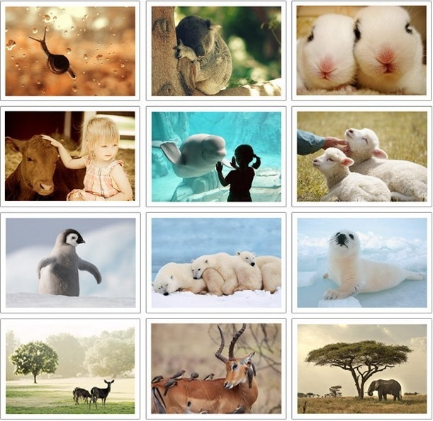 """32 """"The Nature of Pet"""" Postcard Set / Greeting Card Assorted / Birthday Cards Lot"""