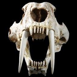 1:1 größe Amerikanischen Alte Tiere Saber Tooth Katze Tiger Schädel Sabertooth Smilodon Fatalis Probe Modell Tier Skelett Modell