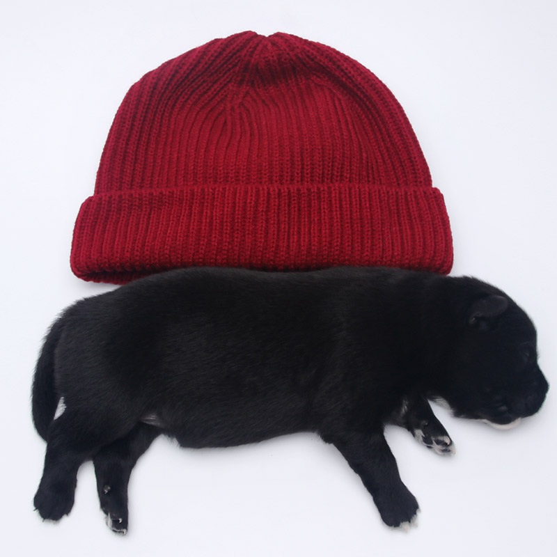 Shipping wool knitted cap hat simple men and women fashion all-match winter warm tide hip-hop hat knitted skullies cap the new winter all match thickened wool hat knitted cap children cap mz081