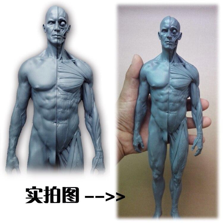 Aliexpress.com: Comprar 30 cm esqueleto humano modelo anatómico ...