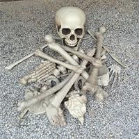 28PCS Simulation Human Bones 1 Bag of Bones Halloween Skeleton Horror toys Haunted House Escape Horror props Decorations