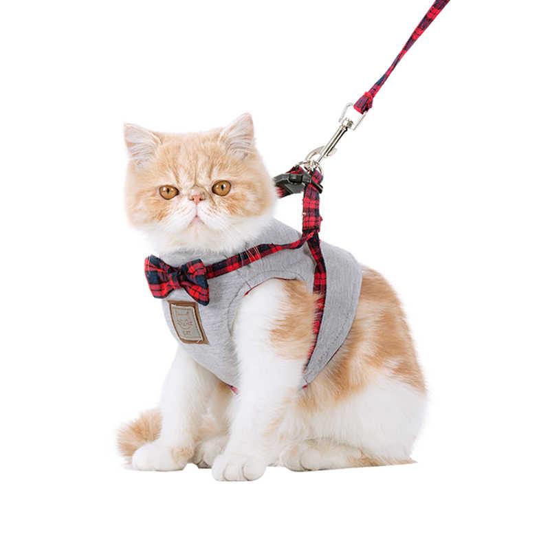 процесс поводок для котов картинки продаются готовые меню