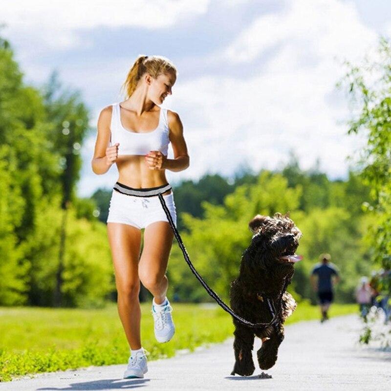 Elastic Dog Traction Belt Rope Set Dog Leash Pet Run with Keeper Pets Sport Leash With Belt  Reward Bag Debris Storage Bag Kits5