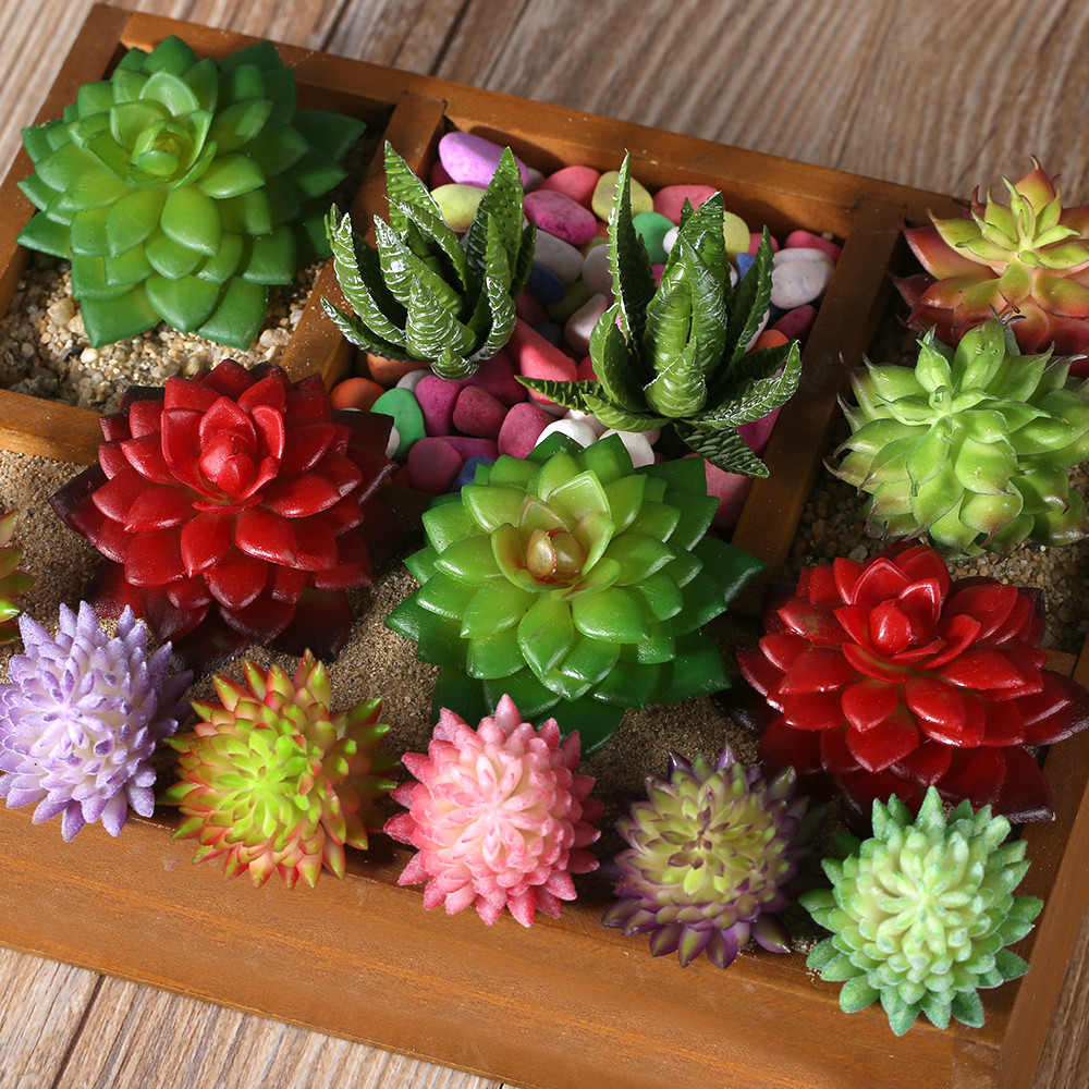 Five kinds of color plant garden succulent grass desert for Garden arrangement