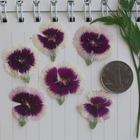 Dianthus Purple With White Color Press Flowers DIY Handmade Material 1 Lot 120pcs Free Shipment Dried