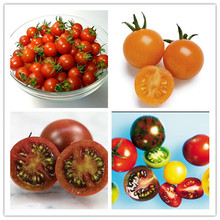 Sweet orange tomato bonsai yellow tomatoes four seasons sowing garden balcony potted fruits and vegetables bonsai 500pcs