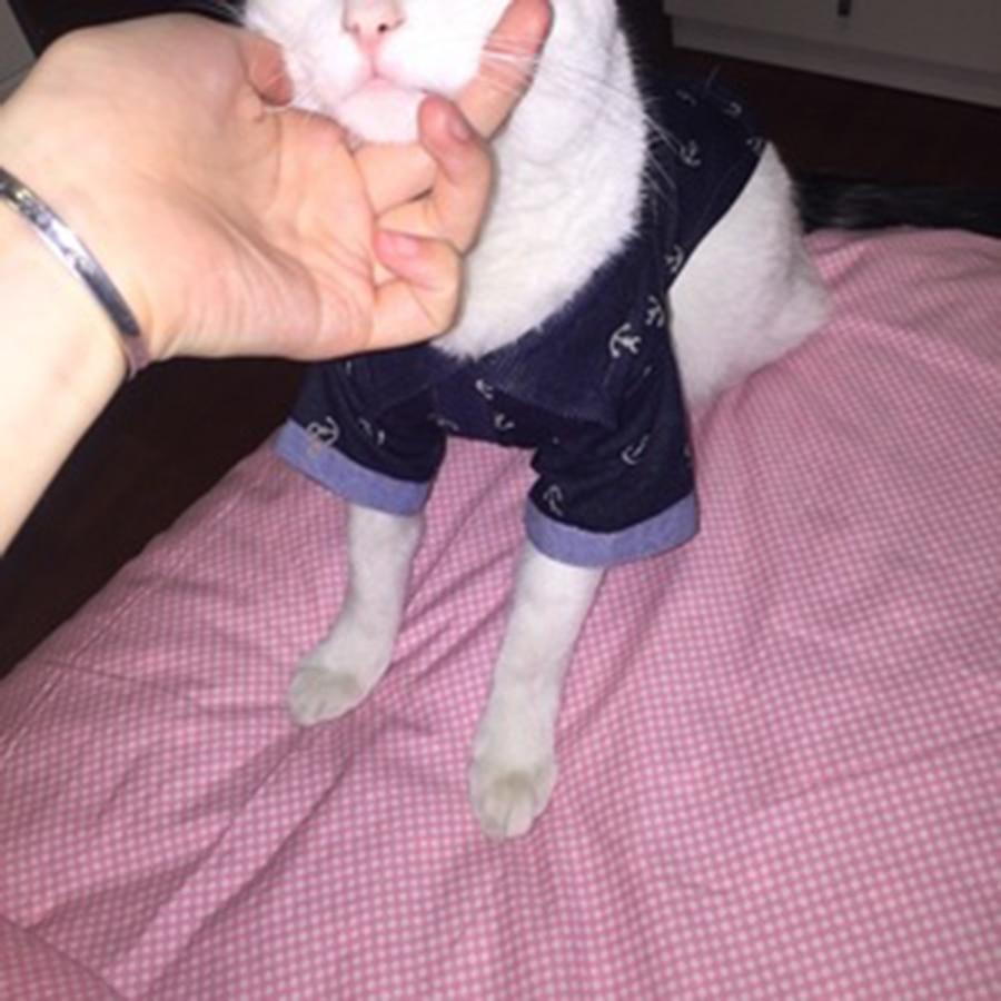 Pet Supplies Dog Cats Spring Summer Cat Wear Pet Supplies Jackets Suit Blouse Novelty Ledibag And Super Cat Pets Coats QQM2507