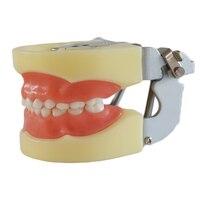 Tooth Care Dental Teaching Study Model Adult Standard Typodont Demonstration Soft Gum FE Articulator