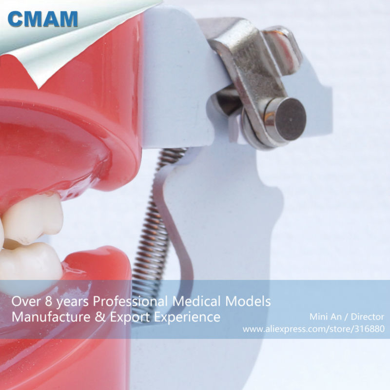 Aliexpress.com : Buy CMAM DA01 Hard Jaw 28pcs Removable Teeth ...