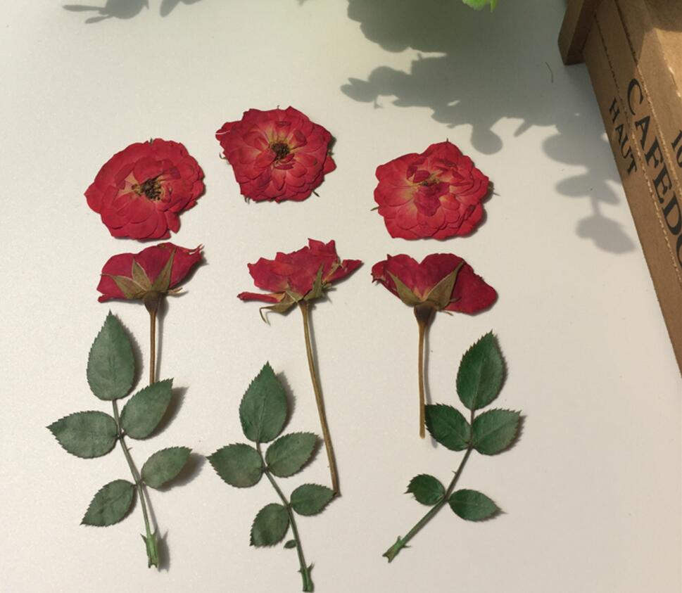 Pressed Wedding Flowers: 120pcs Pressed Dried Red Rose+Bud+Leaf Flower For Wedding