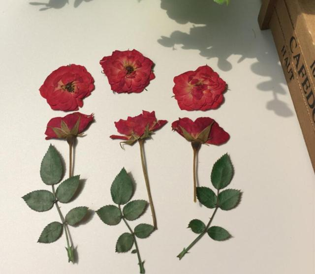 120pcs Pressed Dried Red Rose+Bud+Leaf Flower For Wedding Party Home ...