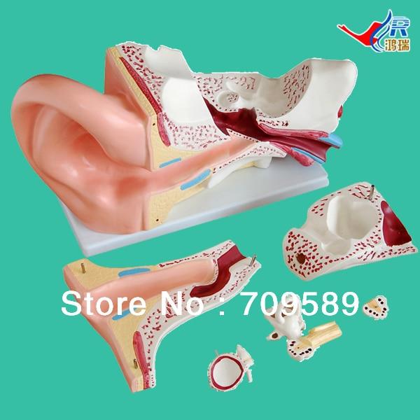 ISO New Style Giant Ear Model, Anatomical Ear Model iso new style giant ear model anatomical ear model