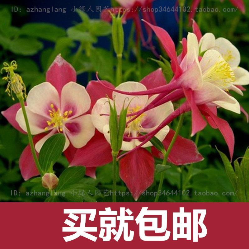Четыре сезона вещания горшечных растений легко сажать цветы крытый балкон мясистые 50 шт.
