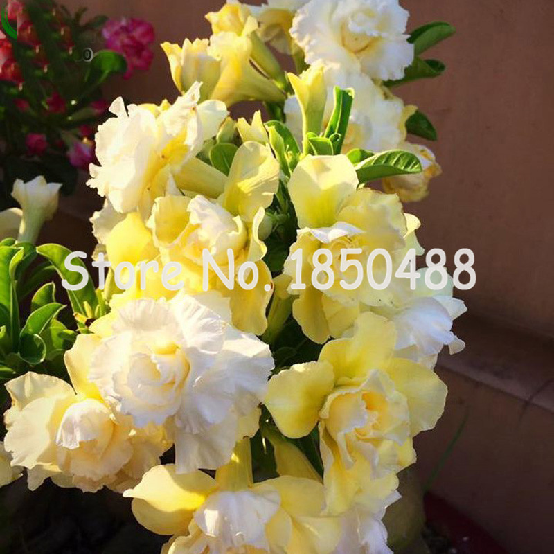compare prices on exotic yellow flowers online shopping/buy low, Beautiful flower