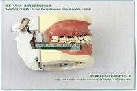 КУМИ ] тяжелой pardon модель, корень сильный практика модель, можно разделить хирургии и корень сильный операции