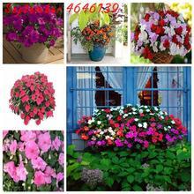 Vente En Gros Flower Impatiens Galerie Achetez A Des Lots A Petits