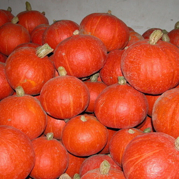 Green Healthy Red Lovely Sweet Delicious Sweet Pumpkin Seed Happy Farm winter squash Color packaging seeds