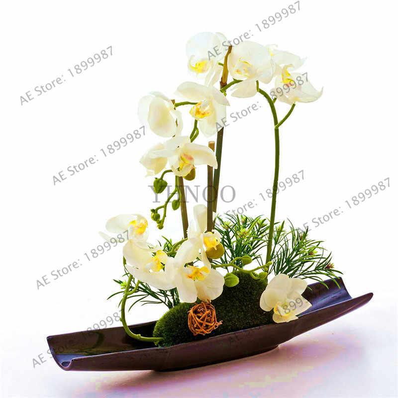 Orquídea phalaenopsis planta área de trabalho Coberta de flores Quando a floração, orquídea borboleta bonsailings cerca de 100 pçs/saco.