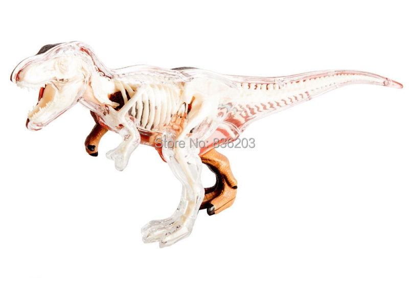 Aliexpress Buy 4d Master Vision T Rex Dinosaur Anatomy Model