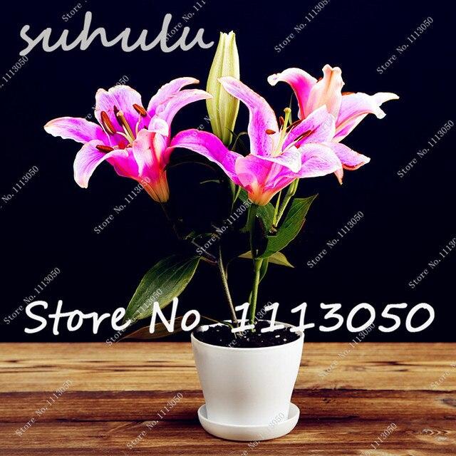 2017 Hot Sale Mix Mini Lily Seeds,100 Pcs 24 Colors Cheap Perfume Lilies Seeds,Rare Color Flower Garden Plant, Bonsai Lily Seeds