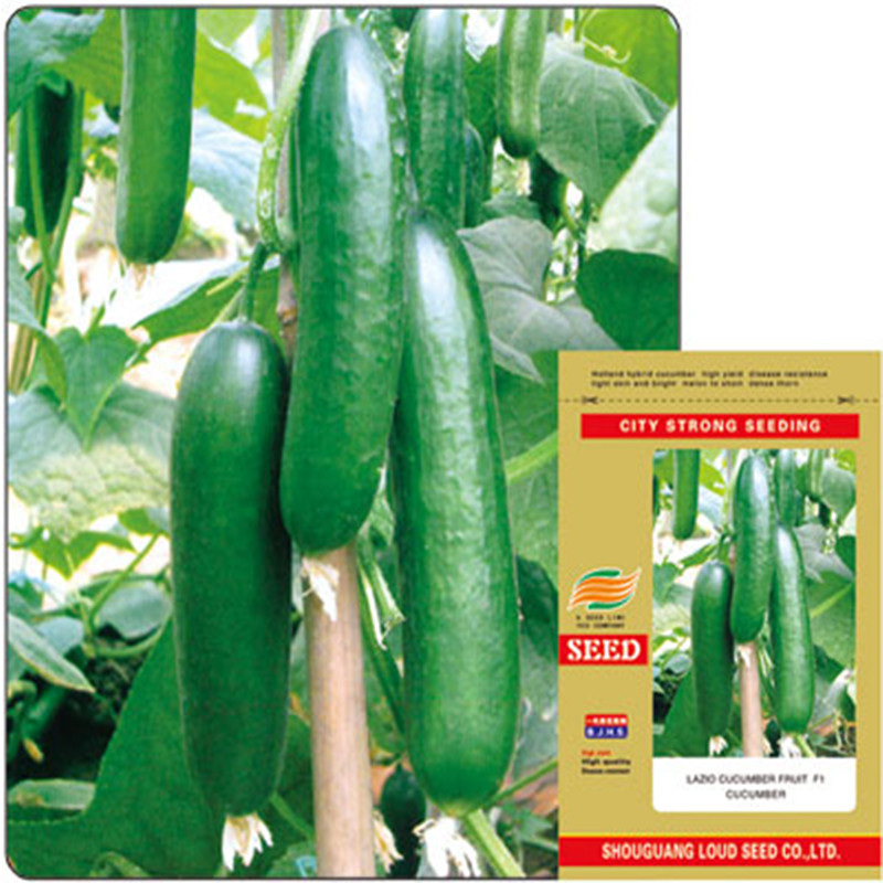 High quality Israel cucumber seeds with secret gifts very sweet eaten fresh green fruit Seeds
