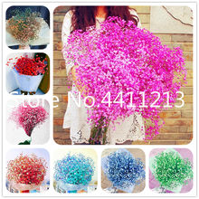 Multi-Color Gypsophila Paniculata Flower, Perennial Garden Flower Bonsai Ornamental Flowers Bonsai Plant for Outdoor-100 Pcs(China)