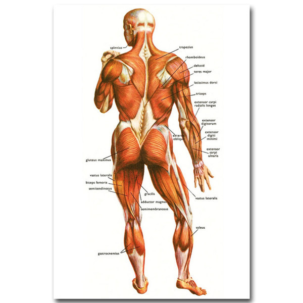 Poster Human Anatomy Muscles System Wall Art Canvas Painting Body