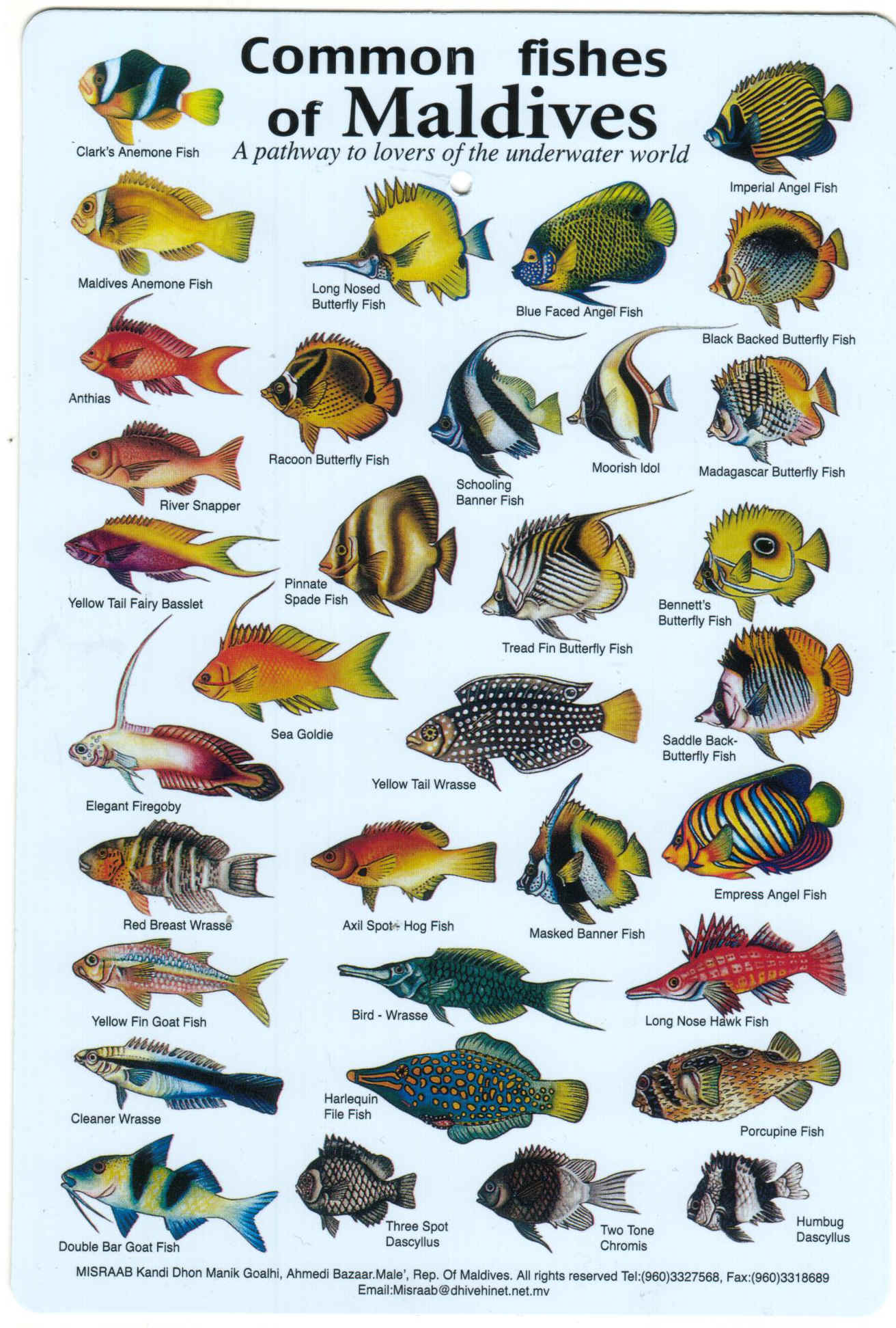 Caribbean Reef Fish Marine Organism Illustration Vintage Retro Kraft Coated Poster Decorative DIY Wall Canvas Sticker Home Decor In Painting Calligraphy