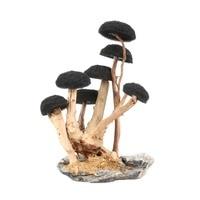 Aquarium landscaping 7 heads mushroom shape forest wooden framed tank Bonsai skeleton Moss tree decoration water grass root bush