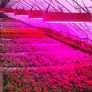 Image 5 - الطيف الكامل 300 واط 400 واط 600 واط 800 واط 1000 واط LED تنمو ضوء أحمر أزرق UV الأشعة تحت الحمراء Led النباتات مصباح ل زهرة النبات الزراعة المائية Growbox خيمة