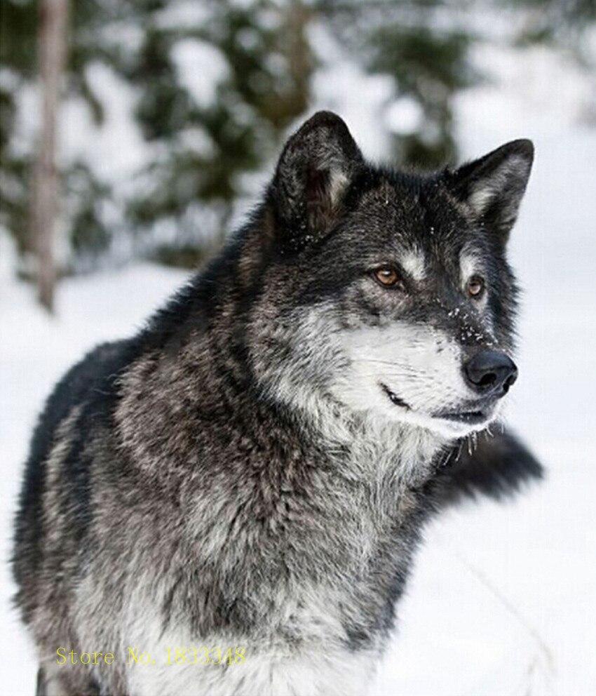 online kaufen gro handel grau wolf bilder aus china grau wolf bilder gro h ndler. Black Bedroom Furniture Sets. Home Design Ideas