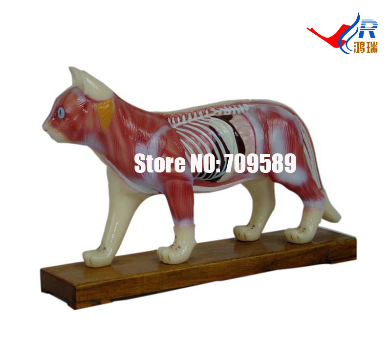 Cat Acupuncture Model, Animal Acupuncture Model 22cm head acupuncture point model head acupuncture four function model acupuncture model