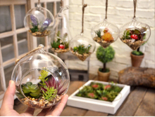 Landscape Hanging Simulation Plant Transparent Glass Potted Plant Living Room Decoration Bottle Bonsai