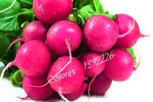 Cherry Belle Radish Seeds Delicious Vegetable Seeds Home Garden Plant