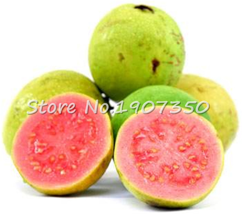 Bonsai 100 Pcs Fresh Sweet Red Guava Psidium Guajava Thai Pink Fresh Large Fruits New Home Garden Plant Plantas Bonsai Pots