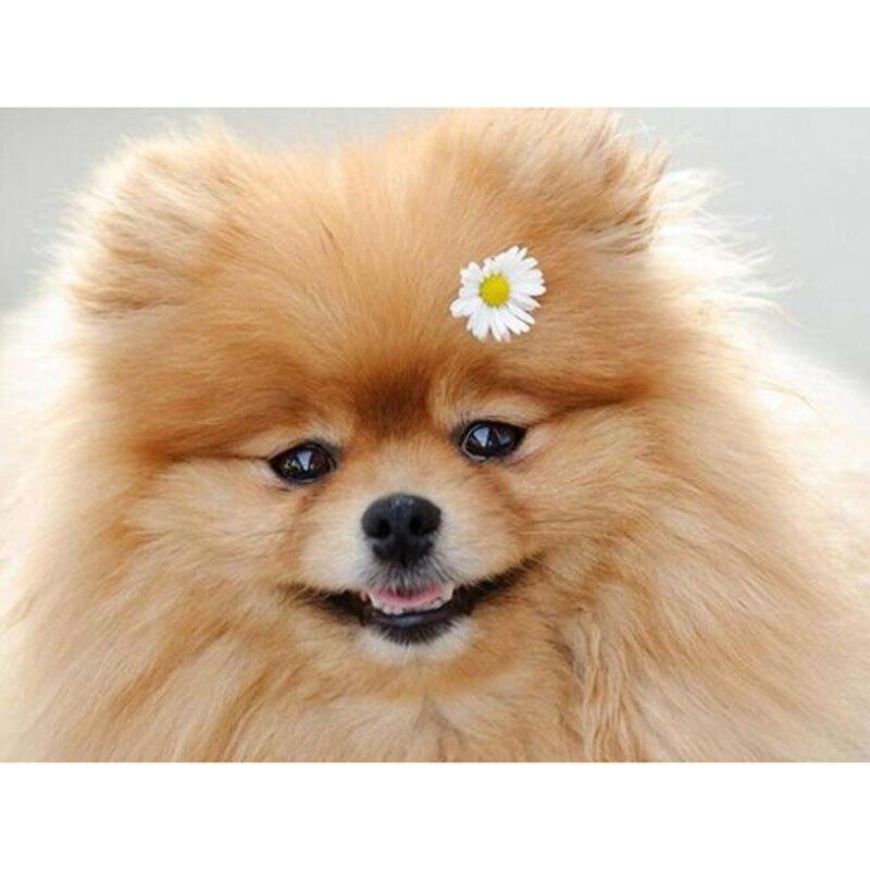 5d Diy Redondo Cuadrado Diamante Pintura Pomeranian Bordado