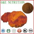 300g GMP Standard Antrodia camphorata Extract with free shipping