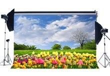 אביב רקע פורח טרי פרחי יער עצי דשא אחו כחול שמיים לבן ענן טבע רקע