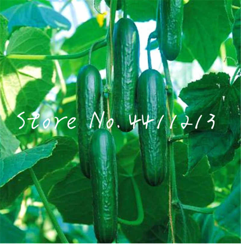 Hot selling 100 pcs Mini Cucumber Bonsai Rare Non-GMO Delicious Cucumber Fruit and Vegetable Plant for Home Garden Planting