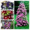 100 unids/bolsa Clematis plantas flor clematis vides bonsai flor perenne flores escalada clematis plantas para jardín de casa