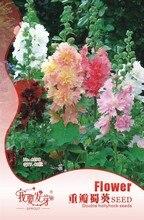 Flowers Seeds Duplicate Hollyhock Seeds Perennial Mixed Alchata Flower Seeds 40 capsules / bag