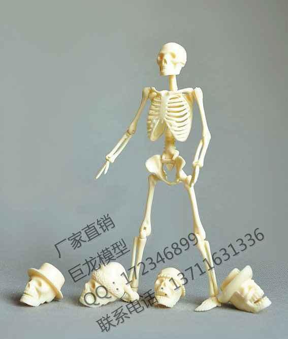 Trasporto libero del corpo Umano 20 cm assemblaggio modello di scheletro giocattoli educativi modello di scheletro umano modello ricambi imballaggio
