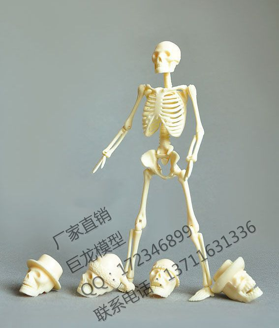 Free Shipping Human Body 20cm Assembling Skeleton Model Educational Toys Model Human Skeleton Model Spare Parts Packaging
