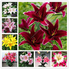 Hot 100 Pcs Imported Lily Bonsai Outdoor Charming Perennial Bonsai Potted Lilum Flower Landscaping Garden Plant Purify the Air(China)