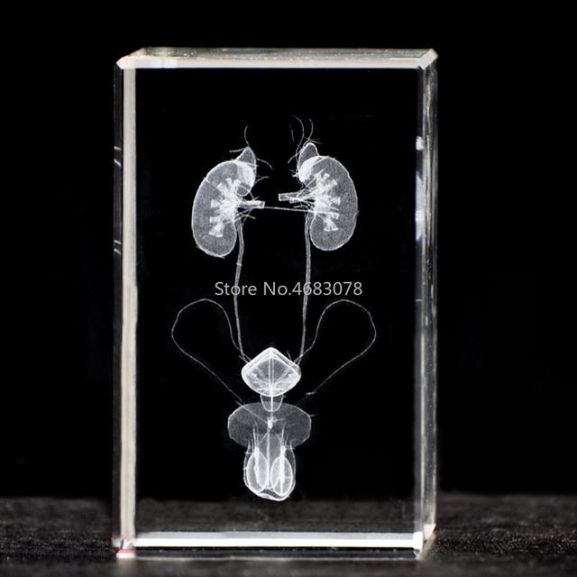 3 DStereoscopic tinh thể bên trong khắc nam hệ thống tiết niệu mô hình Giải Phẫu cho Y Tế nguồn cung cấp giảng dạy hoặc món quà Lý Tưởng 50x50 x 80mm