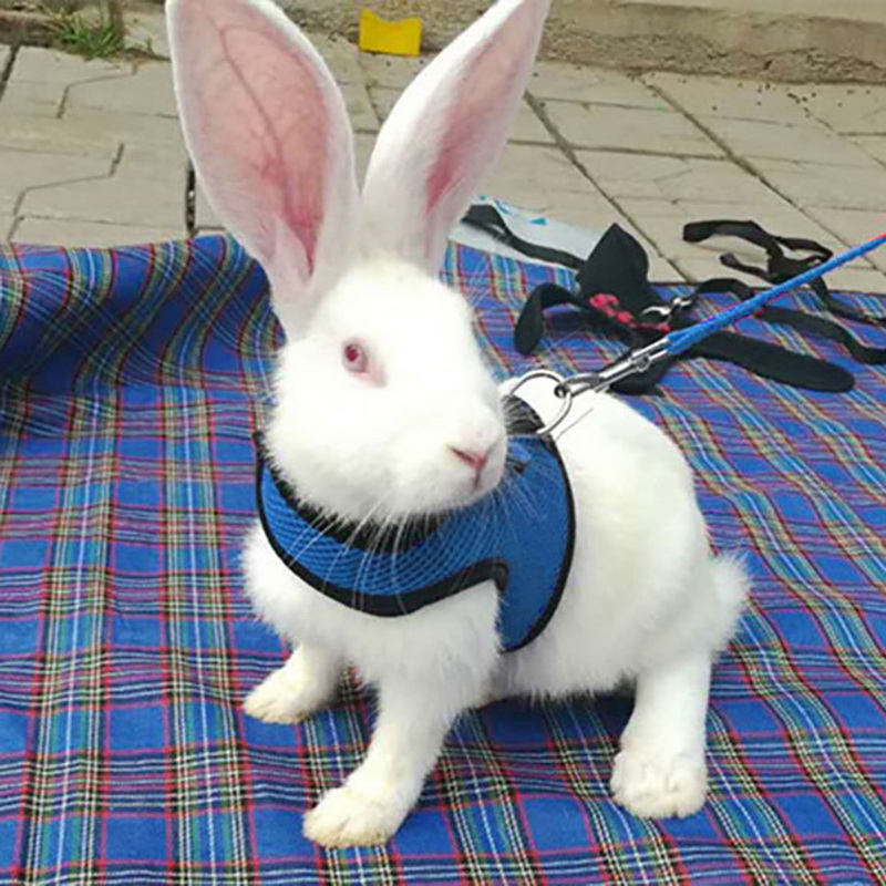 Pet Rabbit Hamster Harness Leashes Set Outdoor Lead Pet Vest Harness Leashes Suit Small Animals Mesh Collars Pet Accessories