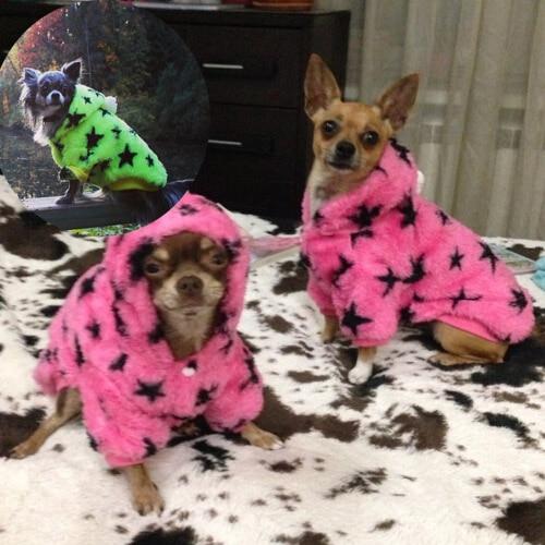 Abrigos para chihuahuas