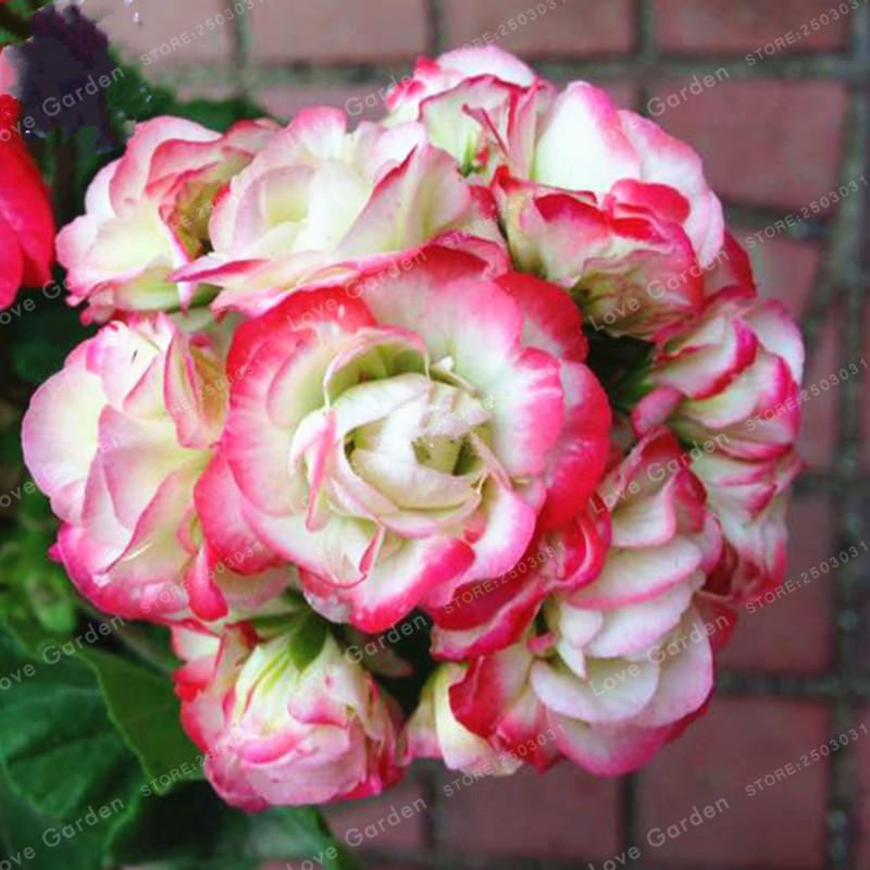 rouge fleurs types-achetez des lots à petit prix rouge fleurs