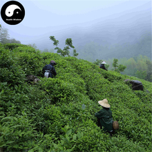 Buy Black Tea Tree Seeds 120pcs Plant Chinese Keemun Tea For Qi Men Hong Cha(China)